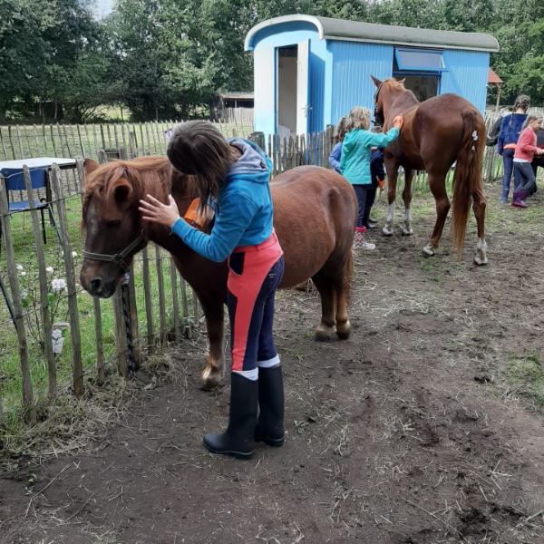 Ponygewenning